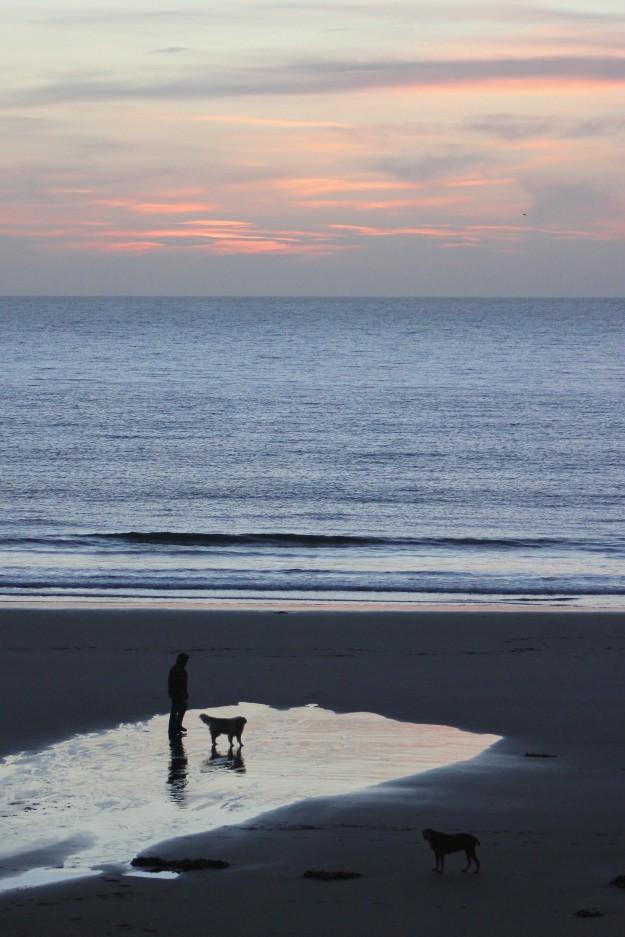 Dog walker 1