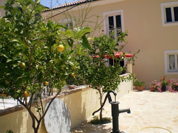 Lemon treee Kalami