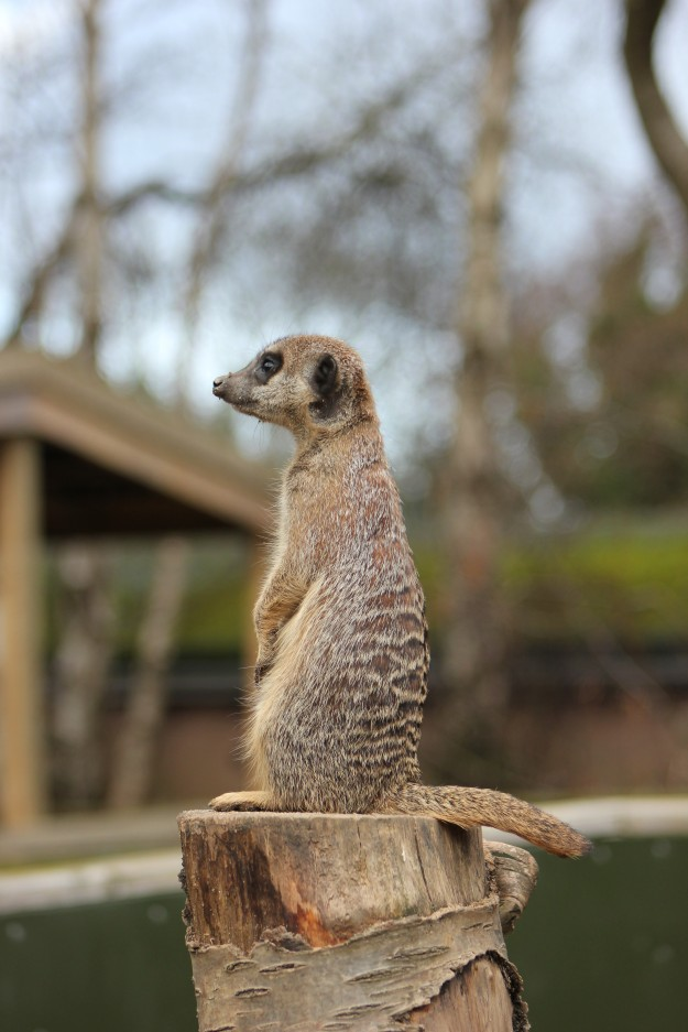 Meerkat3