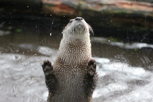 Otter2