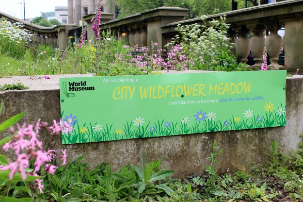 City wildflower meadow