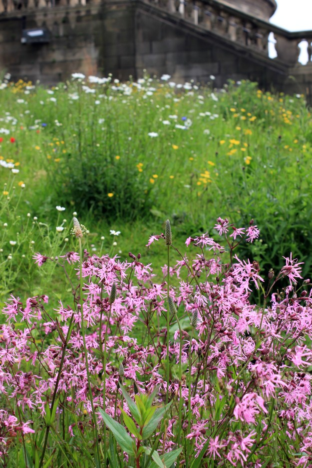 City wildflower meadow4