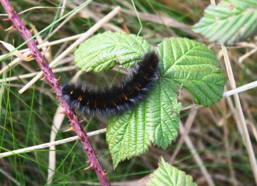 caterpillar-1