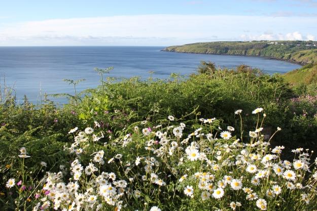Daisy landscape